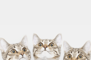 Как отучить кошку драть обои: советы